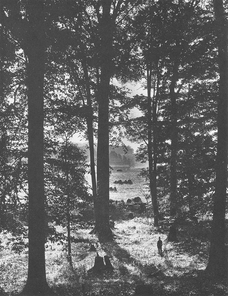 [p.174] 182. A young boy stands in a clearing in the Sacred Grove in upstate New York. In this picture, Anderson felt he had documented the place where Mormon prophet Joseph Smith had seen the Father and the Son. It was taken sometime in 1907 when Anderson was on his way to England.