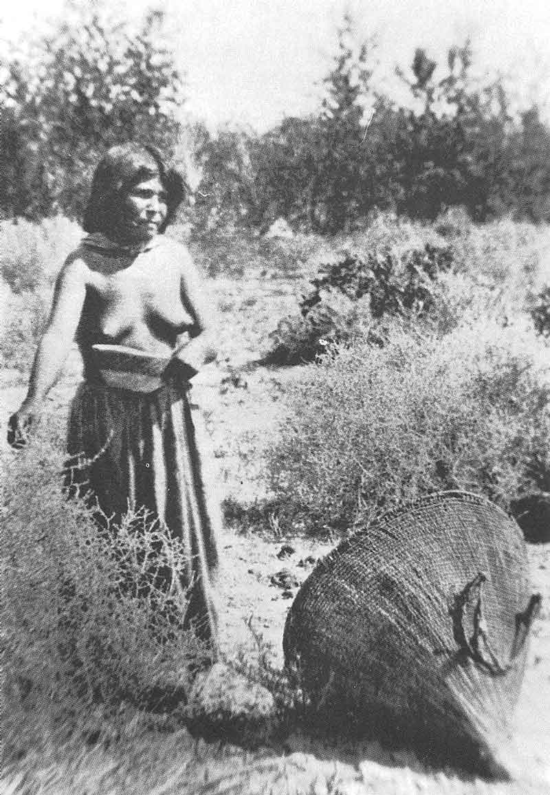 "98. ""Wu-na-vai,"" a Paiute girl in southern Nevada, gathers seeds in a Hillers photograph published by the Bureau of Ethnology."